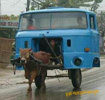 Die besten 100 Bilder in der Kategorie transport: esel, verkehr, transport