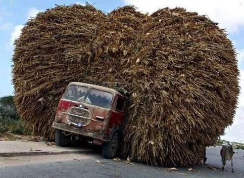 Die besten 100 Bilder in der Kategorie transport: LKW leicht beladen - Da geht doch noch was drauf!