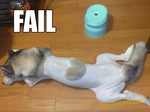 Rasierter Hund