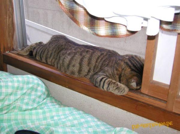Katzen Katze Schlaft Auf Fensterbrett Die Besten 100 Bilder In