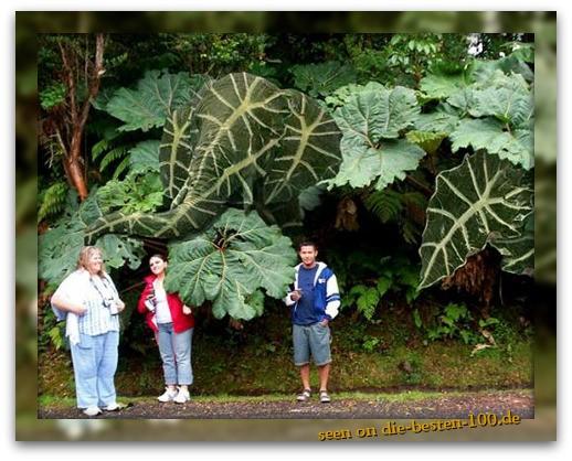Die besten 100 Bilder in der Kategorie photoshops: Photoshopped Giant Plants