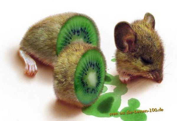Die besten 100 Bilder in der Kategorie photoshops: Kiwi Maus