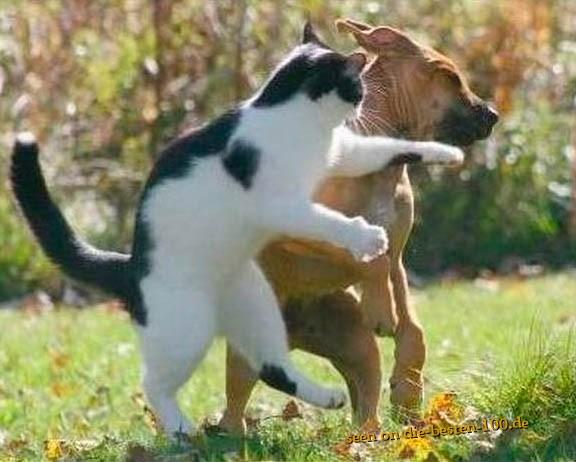 Die besten 100 Bilder in der Kategorie katzen: Nimm das, du Hund! Katze teilt aus.