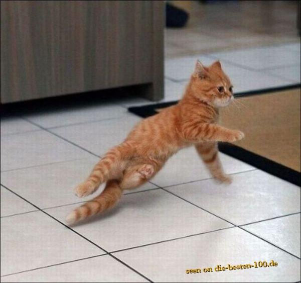 Die besten 100 Bilder in der Kategorie katzen: Breakdance Cat