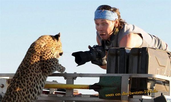 Die besten 100 Bilder in der Kategorie shit_happens: Die will nur schmusen - Leopard Attack