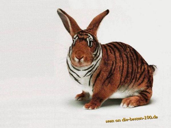 Die besten 100 Bilder in der Kategorie photoshops: Tiger-Hase