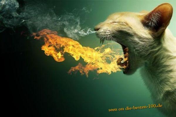 Die besten 100 Bilder in der Kategorie photoshops: Hot Cat