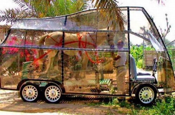 Die besten 100 Bilder in der Kategorie transport: Gläserner Pferde Transporter