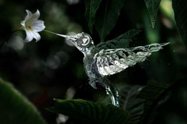 Die besten 100 Bilder in der Kategorie photoshops: Digital Kolibri