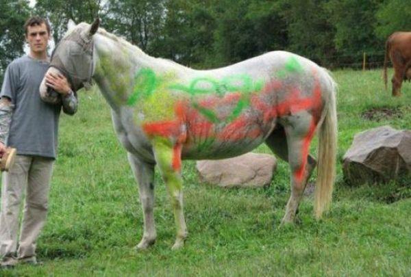 Die besten 100 Bilder in der Kategorie graffiti: Buntes Pferd
