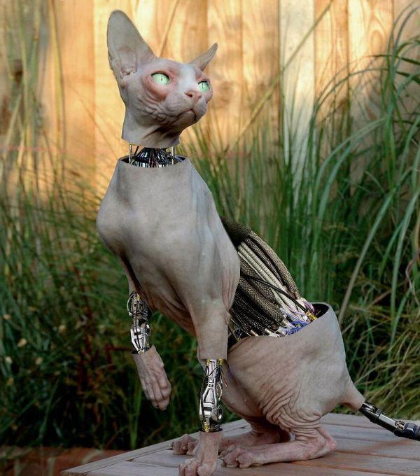 Die besten 100 Bilder in der Kategorie photoshops: Biomechanische Katze