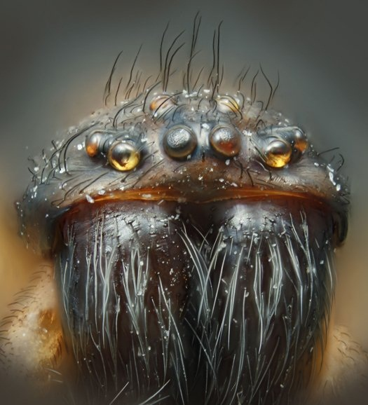 Magnified Spider