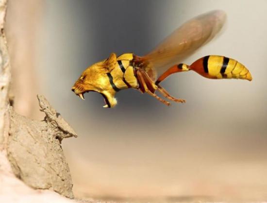 Die besten 100 Bilder in der Kategorie photoshops: Löspe - Löwen-Wespe - Lion Wasp