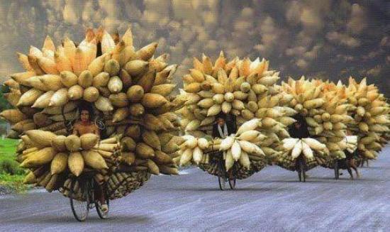 Die besten 100 Bilder in der Kategorie transport: Stachliger Transport