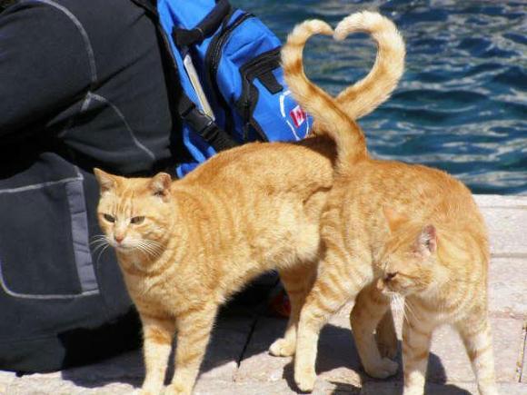 Die besten 100 Bilder in der Kategorie katzen: Herzige Katzen