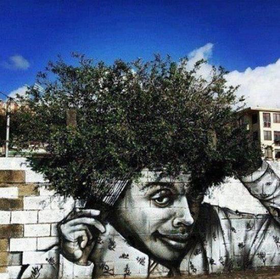 Die besten 100 Bilder in der Kategorie graffiti: Was für ein geiles Graffiti - Busch-Afro-Haare kämmen