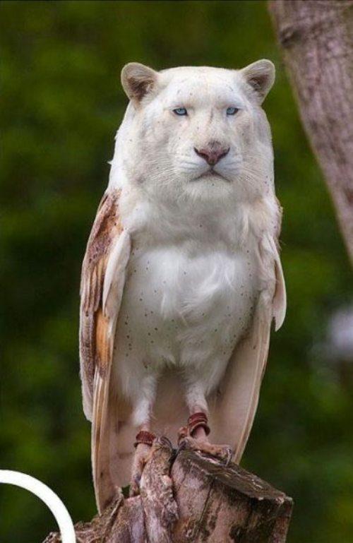 Die besten 100 Bilder in der Kategorie photoshops: Gen-Mutation LöLe - Löwen-Eule