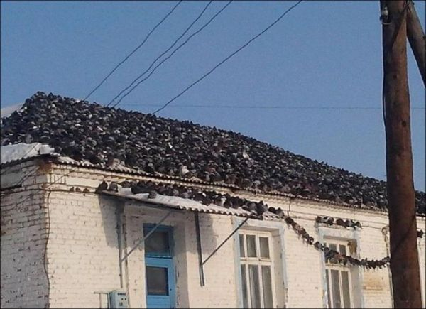 Pigeon Invasion on the roof