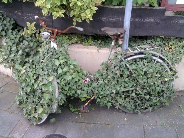 ivy cycle
