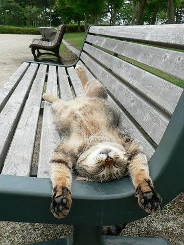 Die besten 100 Bilder in der Kategorie katzen: Katze entspannt