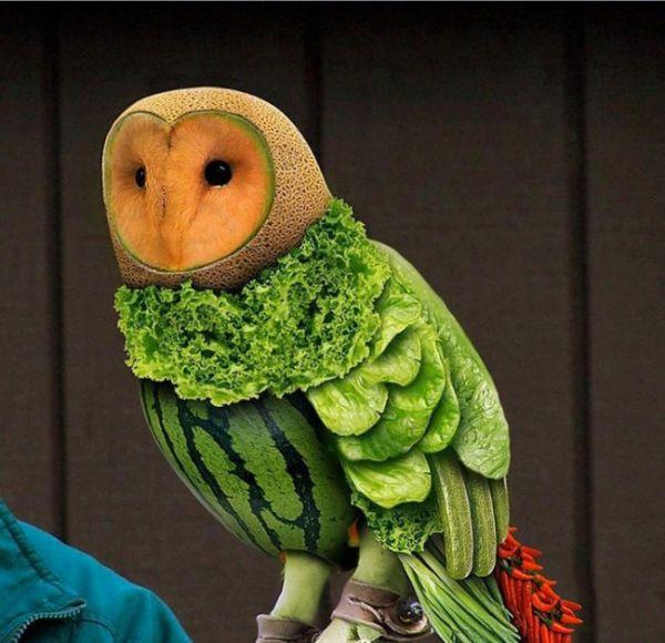Die besten 100 Bilder in der Kategorie photoshops: Photoshop, Melone, Salat, Vegetarischer, Vogel, Obst, Gemüse, Eule