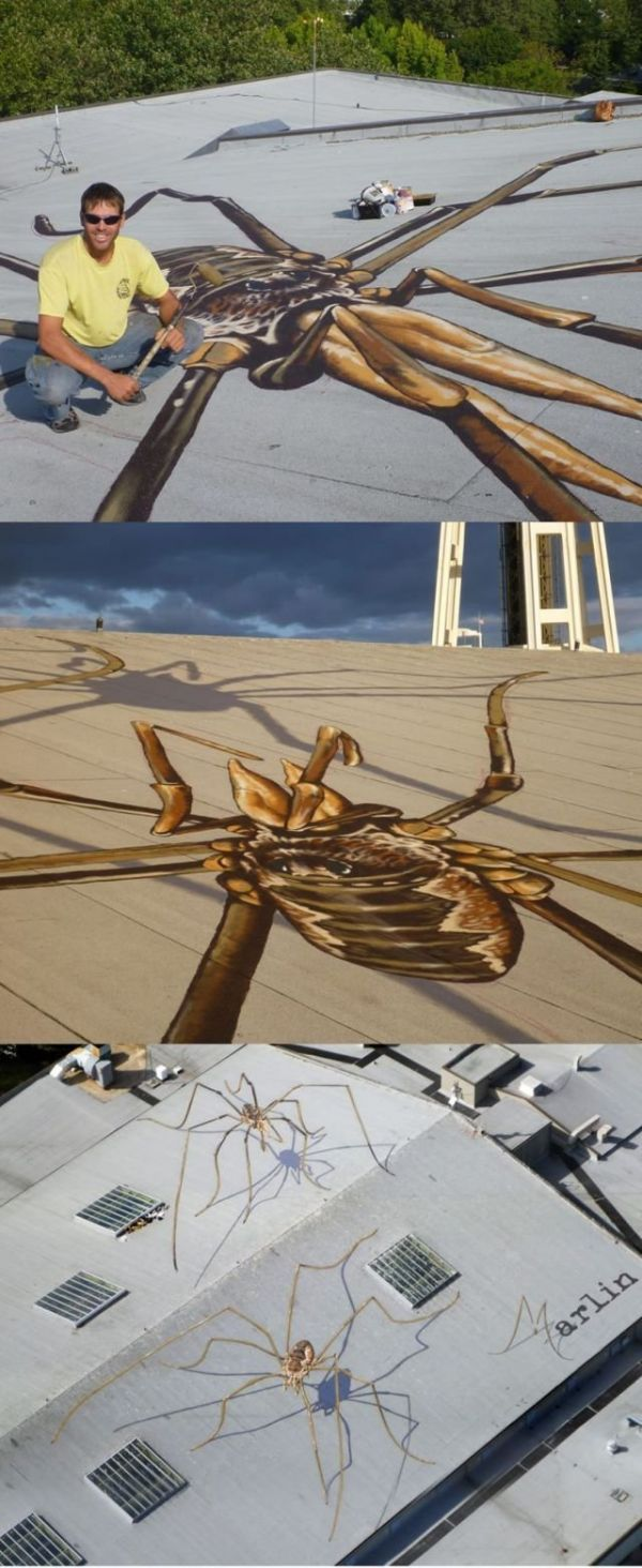Spider, grafitti, roof, funny, 3d