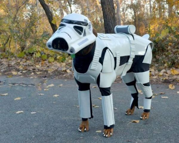 Star wars, Stormtrooper, Dog Unit, Costume