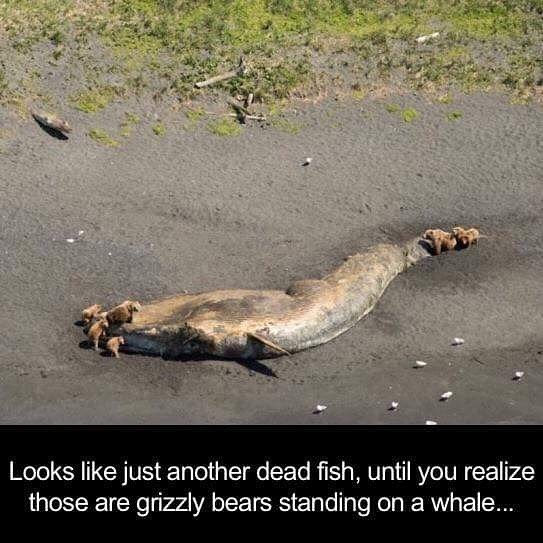 Fish, whale, death, beach, grizzly, bear