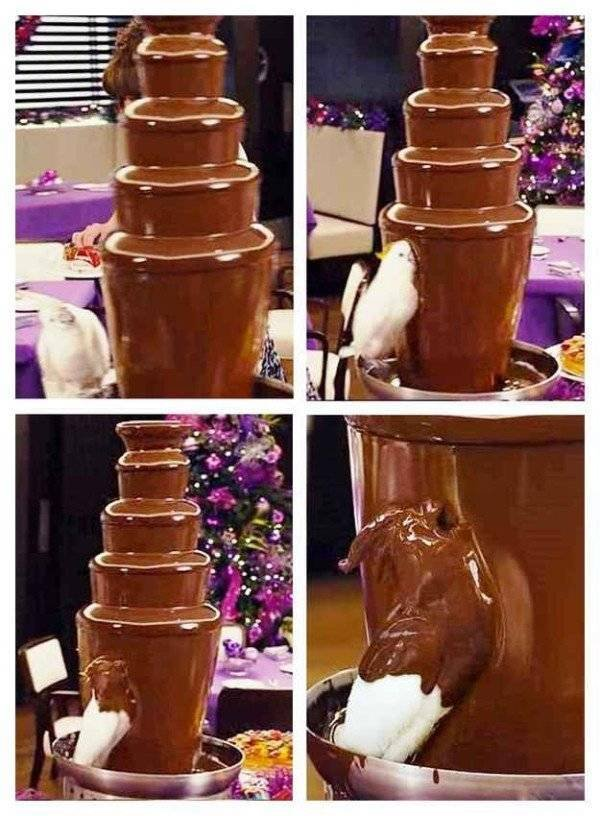 Chocolate fountain, cockatoo, bird, shower