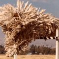The Best Pics:  Position 64 in  - Funny  : Komondor Dog