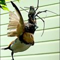 The Best Pics:  Position 6 in  - Funny  : Spinne isst Vogel