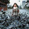 Die besten Bilder in der Kategorie kinder: Tauben-Alarm