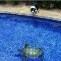 Die besten Bilder in der Kategorie strassenmalerei: Gemalter Swimming Pool
