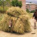 Die besten Bilder in der Kategorie transport: Esel transportiert Stroh