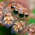 The Best Pics:  Position 28 in  - Funny  : Spring-Spinne