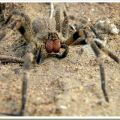 The Best Pics:  Position 50 in  - Funny  : Wandering Spider - Hochgiftig