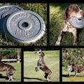 Die besten Bilder in der Kategorie werbung: Strong Dogs - Dog Food - Frisbee