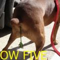 The Best Pics:  Position 52 in  - Funny  : Low Five - Igit