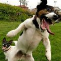 The Best Pics:  Position 40 in  - Funny  : hund, grimasse, fun