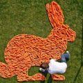 Die besten Bilder in der Kategorie kunst: Karotten-Hase