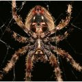 The Best Pics:  Position 35 in  - Funny  : Barn-Spider