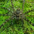 The Best Pics:  Position 75 in  - Funny  : große Spinne auf Moos