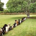 The Best Pics:  Position 25 in  - Only one Tree - Dog Pee Problem