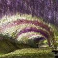 The Best Pics:  Position 57 in  - Flower tunnel