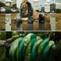 Die besten Bilder in der Kategorie photoshops: Picture Mix - Lion Sculpture, Snake
