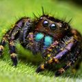 The Best Pics:  Position 55 in  - colorful Spider