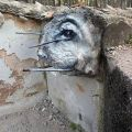 Die besten Bilder in der Kategorie graffiti: Rabbit Eye Grafitti