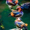 Die besten Bilder in der Kategorie Vote: Colorful Ducks