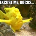 Die besten Bilder in der Kategorie Vote: Excuse me Rocks - Yellow Chief Fish