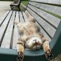 Die besten Bilder in der Kategorie Vote: Cat relaxed